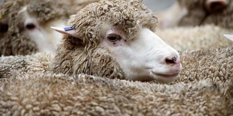 How to dye merino wool | eHow